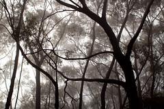 Kanangra-Boyd Dawn