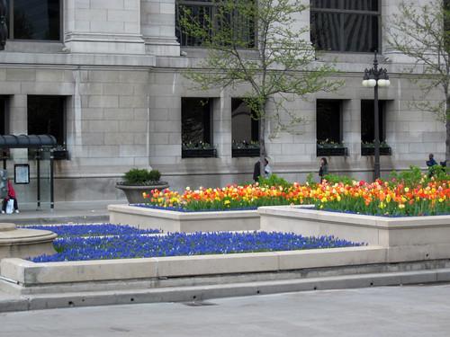 Millennium Park Spring 2010-10