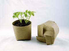 Seedling in a toilet paper roll repurposed as ...