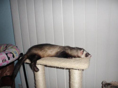 Lazy Tenchi