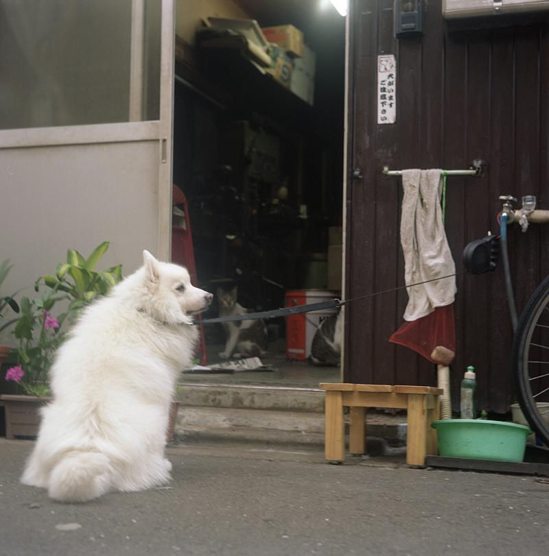 町工場の犬と猫