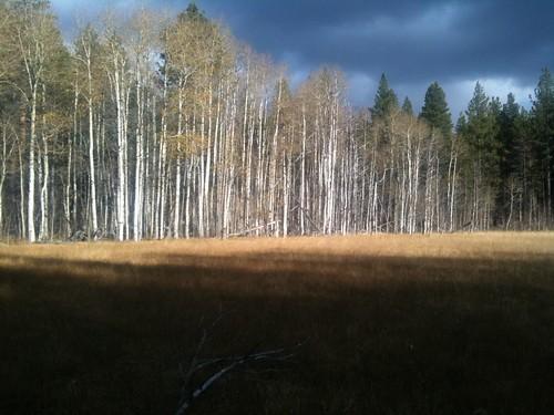 FallTrees2