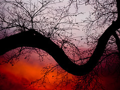 12 / 365: Snake in a Fire (Chris Hlady) Tags: winter sunset tree fall silhouette delete10 clouds delete9 delete5 delete2 delete6 delete7 bare branches save3 delete8 delete3 100v10f delete4 save save2 save4 save5 curve iowacity twtmeiconoftheday deletedbydeletemeuncensored deletebstorage
