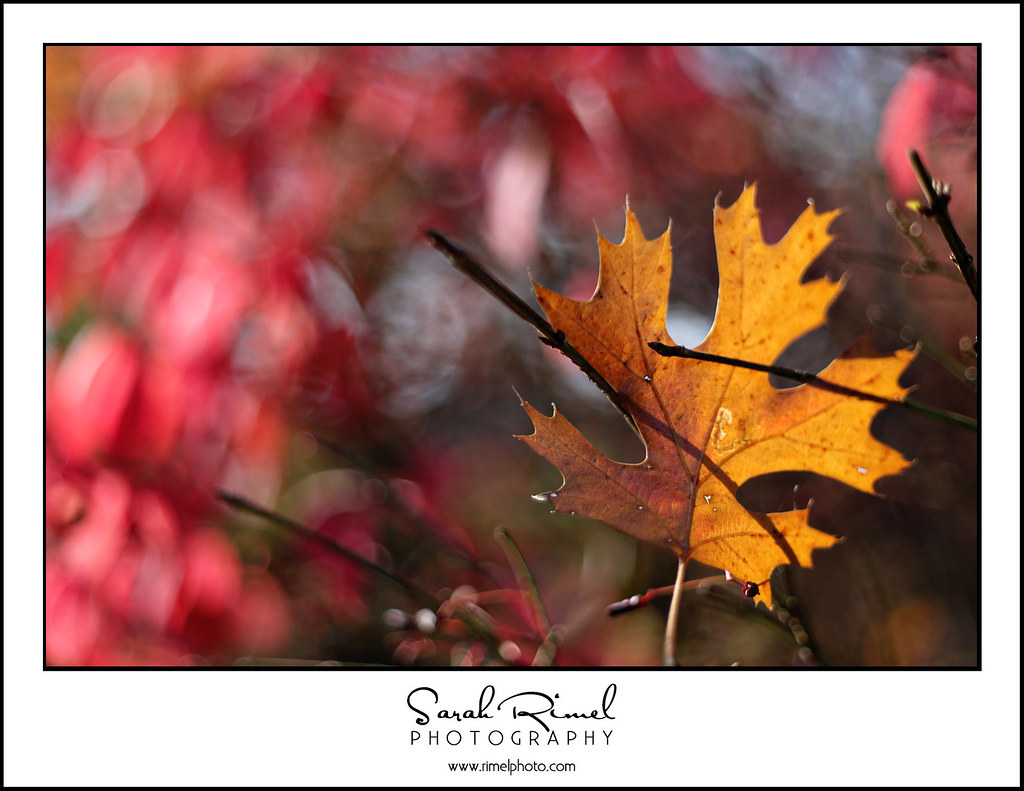 leaf fun 09