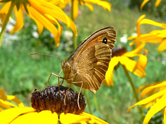 fiori, farfalle... colori (perplesso42) Tags: flowers colours butterflies fiori colori farfalle blueribbonwinner coth vosplusbellesphotos expressyourselfaward vividstriking