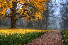 Campus (Malcolm MacGregor) Tags: street autumn mist cold color tree brick fall yellow fog canon campus rebel virginia vanishingpoint university path main explore hero winner charlottesville frontpage hdr highdynamicrange xsi photomatix tonemapping 450d detailsenhancer photomatixdiscountcode thechallengefactory cvilletomorrowfavorite thepinnaclehof kanchenjungachallengewinner tphofweek133