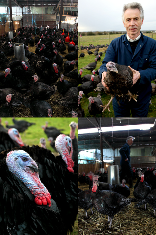 Turkey Farm Time