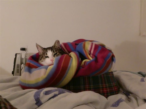 Namerovsky's Winter Blanket