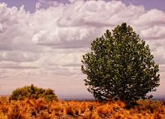 Wandering like a cloud / Vagando como una nube (Claudio.Ar) Tags: mountains color argentina topf75 sony winery mendoza andes bodega dsc h9 ucovalley salentein valledeluco claudioar claudiomufarrege