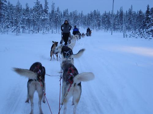 Am Hundeschlitten durch Finnland