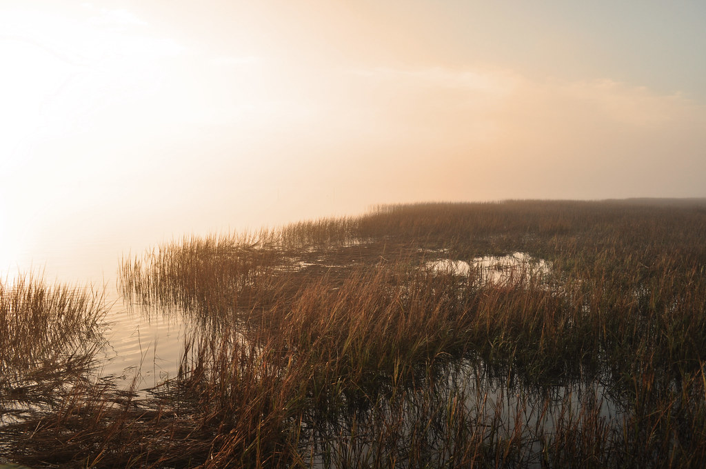 Spartina Sunrise 3