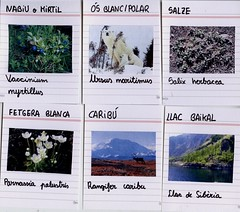 flora_fauna_biomes freds_4