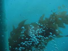 bubbles (chasingbluebirds) Tags: island avalon 2010 santacatalina