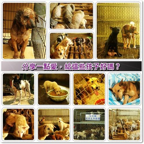 「募資源志工」看著自家的寵物,分享出一點愛,給賈鴻秋老師保育場那些孩子好嗎?20100228