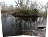 swamp 8 (aranreo) Tags: island scout tkf karankawa