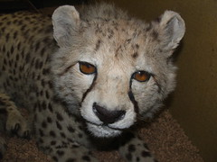 DSCF3571 (Phil D-UK) Tags: animals tring naturalhistorymuseum rothschild