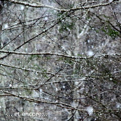 It doesn't know when to stop. (Tina-Pina) Tags: square scotland perthshire again snowing rectangle parallelogram butnotsquare