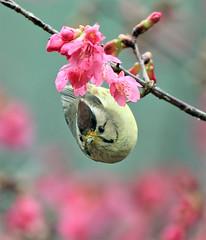 #578  (John&Fish) Tags: bird nature birds wow photographer taiwan best 2010 naturesfinest supershot goldstaraward