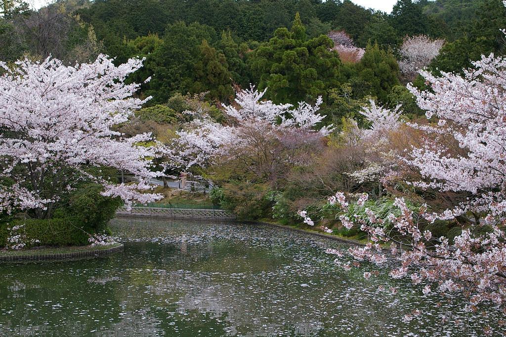 rokuonji(kinkakuji) & ryuanji