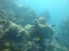 東沙發現獨立礁,營建署海管處提供。