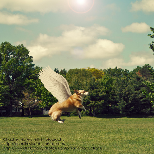 365/140 - Rapture Corgi!