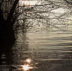 Su arabeschi di lievi onde....le stelle (Annamaria Rizzi) Tags: lago acqua riflessi rami lakegarda ondine lagodigarda gardasee lazise stelline arabeschi estremità stellediluce