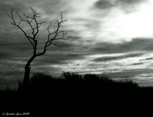 Landscape In Black and White [1]