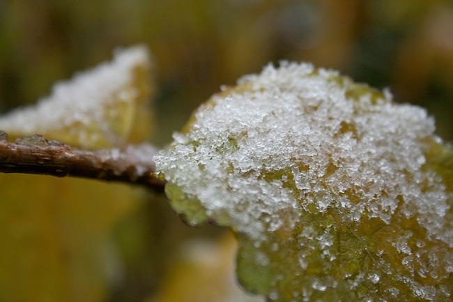 der erste schnee 200903
