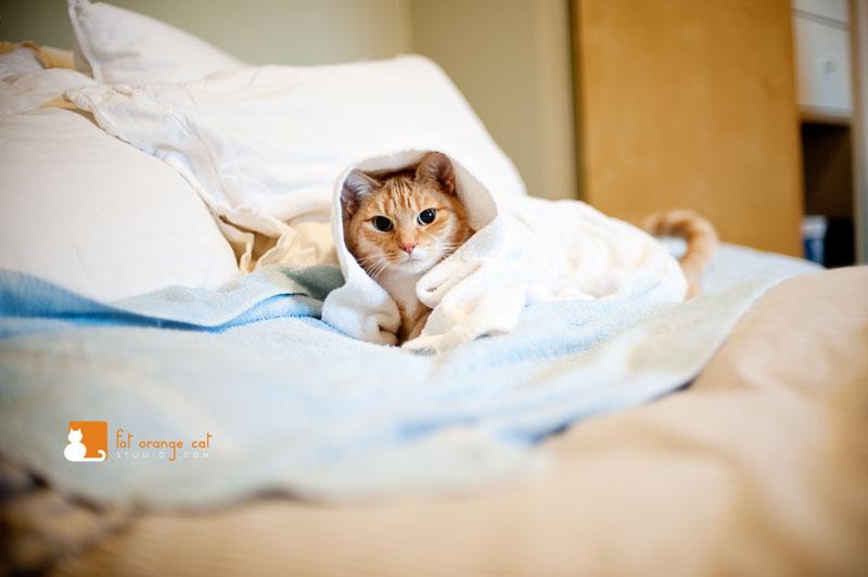 Orange Cat Photoshoot In Charlestown Fat Orange Cat Studio