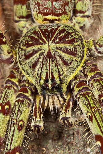 it's always good to look close 10 - huntsman spider