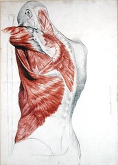 XGS205738 (aibres) Tags: red david france muscles pencil paper french chalk back jean drawing muscle pierre muscular du des system musee medical human anatomy torso shoulder biology et 19th tronc conditions angers beauxarts anatomical dangers humaine depaule xgs205738 99anatomie 17881856