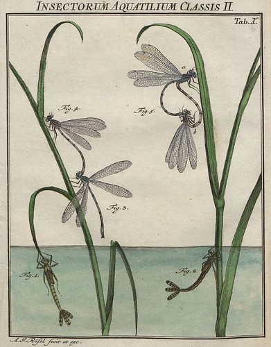 Insectorum aquatilium Classis II V.2
