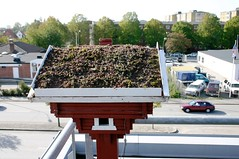 Scandinavian Green Roof Inst. (i-sustain) Tags: birdhouse malmo greenroof