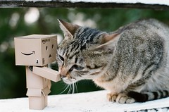 kiss ~  () Tags: film cat toy toys amazon taipei  danbo  contaxnx  danboard    091223 contaxn5014