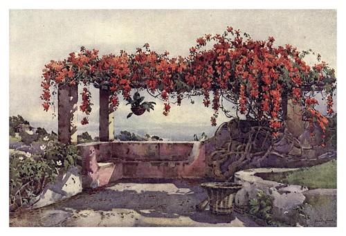 019-Enredadera de Bignonia Venusta en Madeira-The flowers and gardens of Madeira - Du Cane Florence 1909