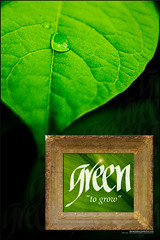 Green To Grow