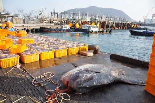 Mercado del pescado