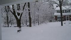 Feb 10.10 - Front Yard 4