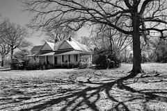 Family Tree (Brian Brown Photography/Vanishing Media) Tags: pictures winter blackandwhite tree architecture farmhouse yard ga georgia photo oak shadows farm country picture double shade vernacular hip frontporch tinroof homeplace americansouth terrellcounty vanishingsouthgeorgia copyrightbrianbrown