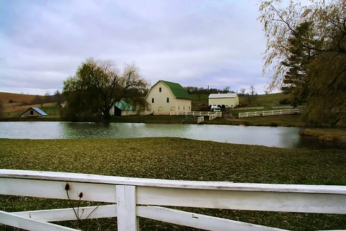 The Farm Pond