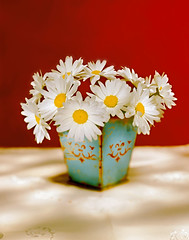 white daisies (noam.armonn) Tags: old red stilllife white flower love nature beauty background mother vase florist fathersday decor chrysanthemum mothersday valentinesday flowerarrangement oldfashioned daisey tranquilscene bunchofflowers daisyfamily homeinterior chamomileplant