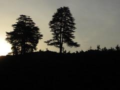 DSCN0285 (oasis_236) Tags: mountains bells hills valley kanda holi almora peachtrees snowpeaks peartrees plumtrees uttarakhand bageshwar