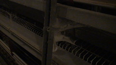 Battery cage egg operation in Ontario (Twyla Francois) Tags: ontario canada bird chicken broken animal metal neglect farm egg battery feather cage poultry crate hen abuse laying treatment cruel ethical injure