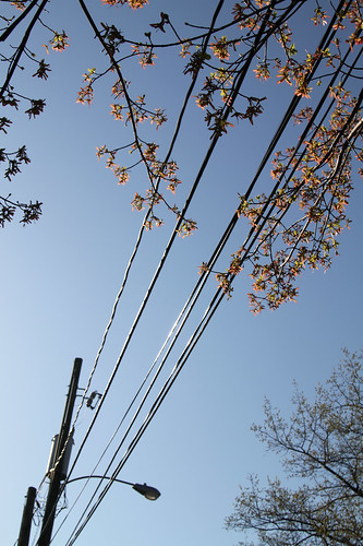 Maple + Wire + Streetlight!