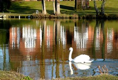 Swan (Tasmin_Bahia) Tags: blue orange brown white reflection river spring swan beak feathers peaceful grace reflective ripples gliding graceful