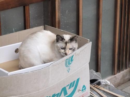 Today's Cat@2010-04-15