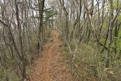 今倉山の尾根の道