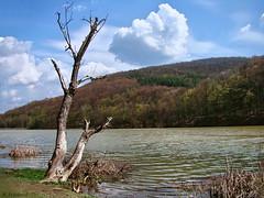 Landscape with old tree (R_Ivanova) Tags: blue sky lake tree nature water clouds landscape sony   mygearandme rivanova