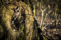 Tree (Rick BoSS) Tags: tree forest hellios swirly bokeh