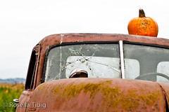 old rusty (rosellaphoto) Tags: california old orange gourds vegetables truck nikon rust pumpkins rusty highway1 vehicle roadside aging halfmoonbay gmc d90 50mmeseries wwwrosellaphotocom rosellatibig bobsvegetablestandandpumpkinpatch